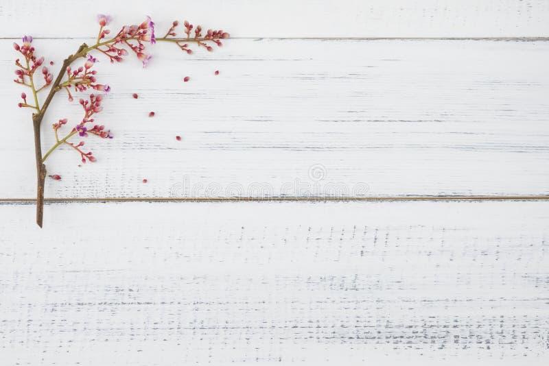 Rosa stjärnafrukt blommar på vitt trä royaltyfria bilder