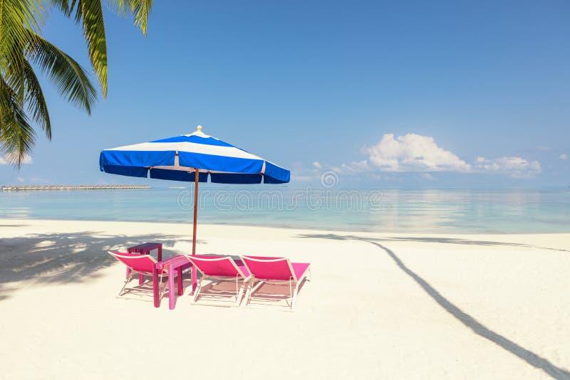 Rosa strandstolar och blått paraply i Palm Beach - tropisk Hol arkivbilder