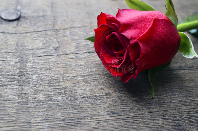 Rosa su vecchio fondo di legno per il giorno del ` s del biglietto di S. Valentino con lo spazio della copia Valentine Rose fotografie stock libere da diritti