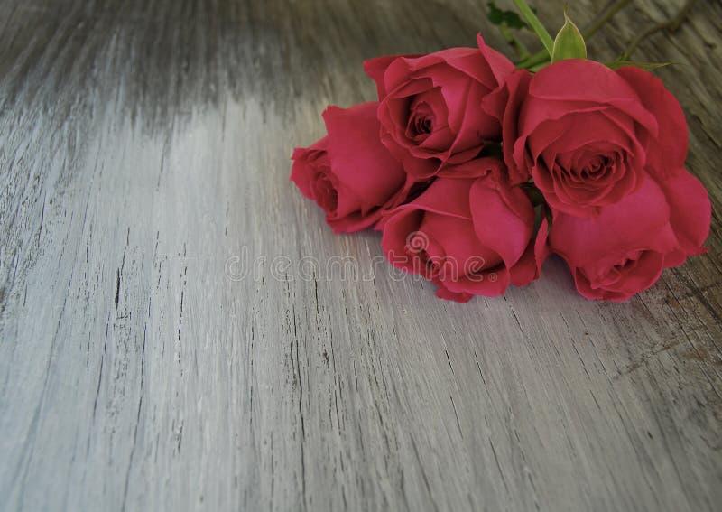 Rosa sul vecchio legno del granaio immagini stock