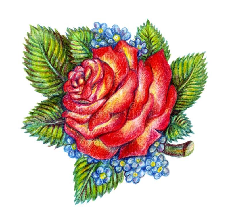 Rosa tirada mão do vermelho no fundo branco foto de stock