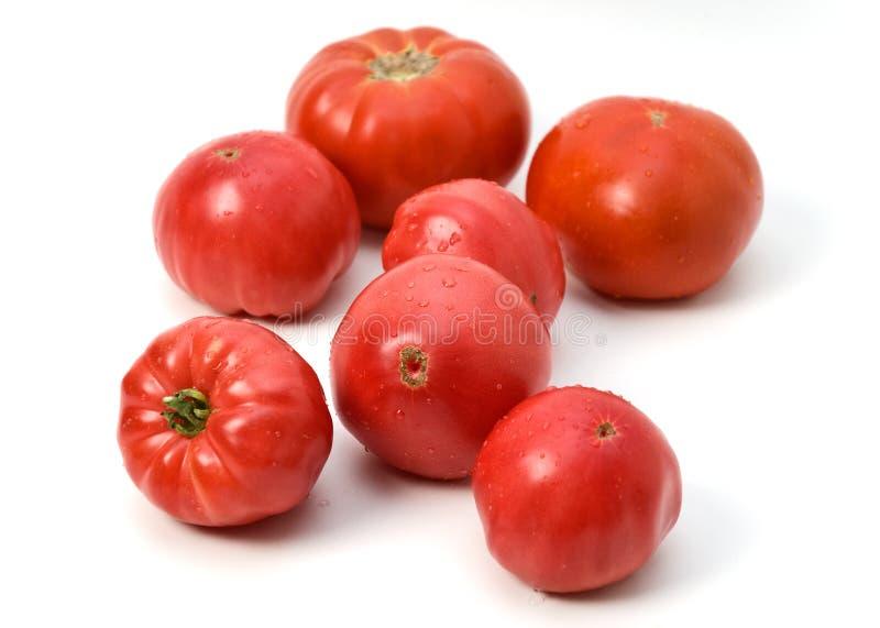 rosa tomater arkivbild