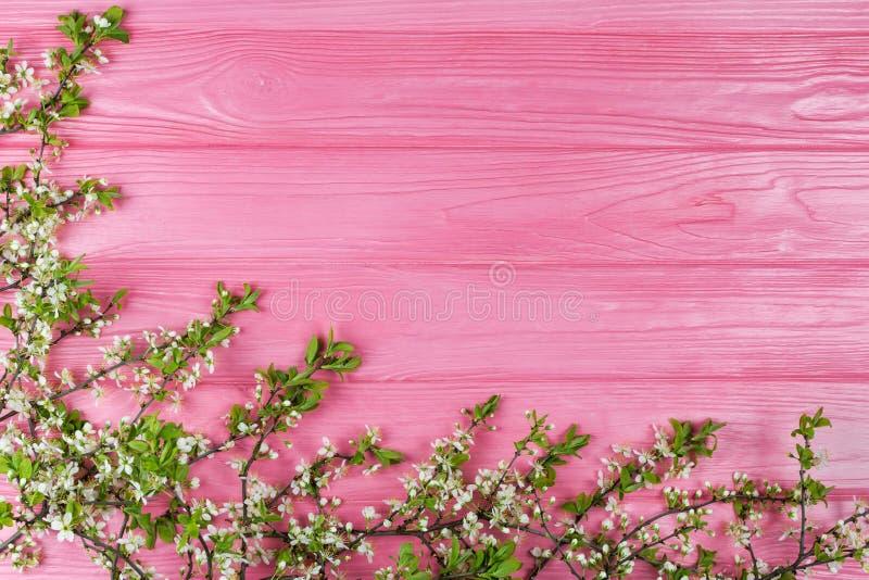 Rosa träbakgrund med filialer för blomningkörsbär royaltyfria foton