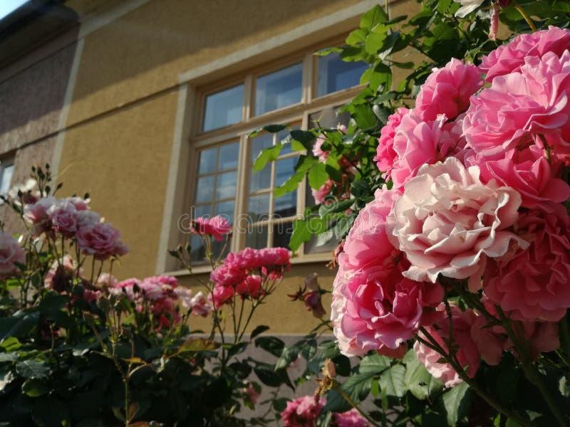 Rosa traditionsträdgård för tappning av vår farmor arkivfoto