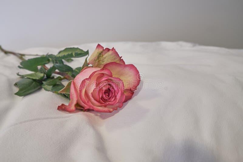 Rosa triste na edredão imagem de stock royalty free