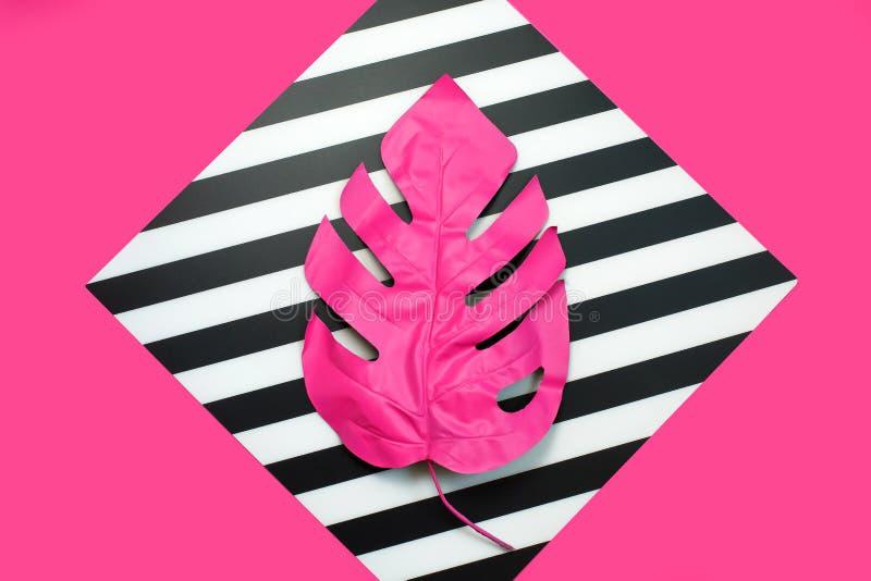 Rosa tropisches und Palmblätter von monstera in der vibrierenden mutigen Farbe auf Doppelhintergrund Konzeptkunst minimal stockbild