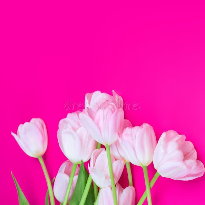 Rosa tulpan blommar på rosa bakgrund Lycklig påsk, vår arkivbilder
