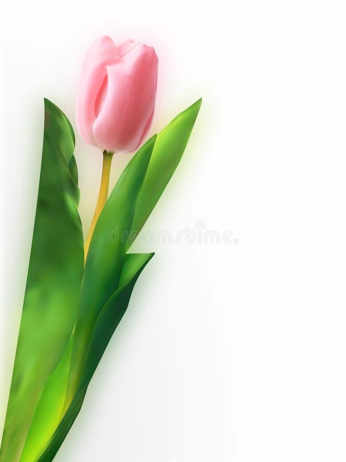 rosa tulpan för blomma stock illustrationer