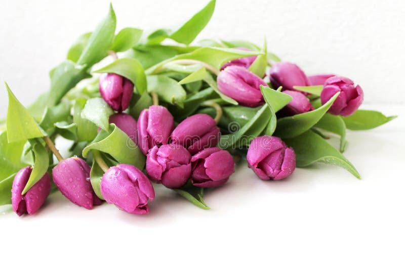 rosa tulpan för droppar royaltyfria foton