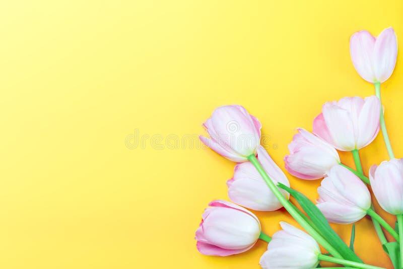 Rosa tulpanblommor på gul bakgrund med kopieringsutrymme för din text målat gräs för 2 placerade allt för easter för hinkfågelung royaltyfri bild