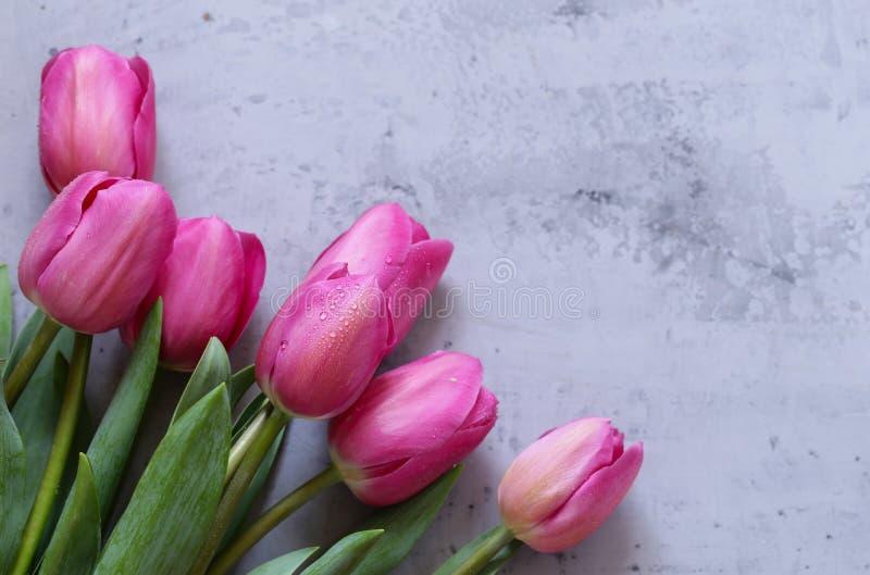 Rosa tulpanbukett för dekor arkivbild