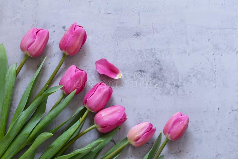 Rosa tulpanbukett för dekor royaltyfria bilder