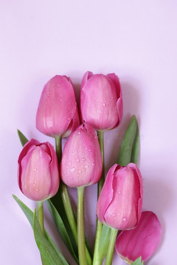 Rosa tulpanbukett för dekor fotografering för bildbyråer