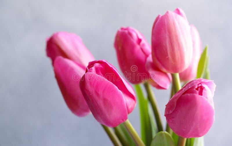 Rosa tulpanbukett f?r dekor fotografering för bildbyråer