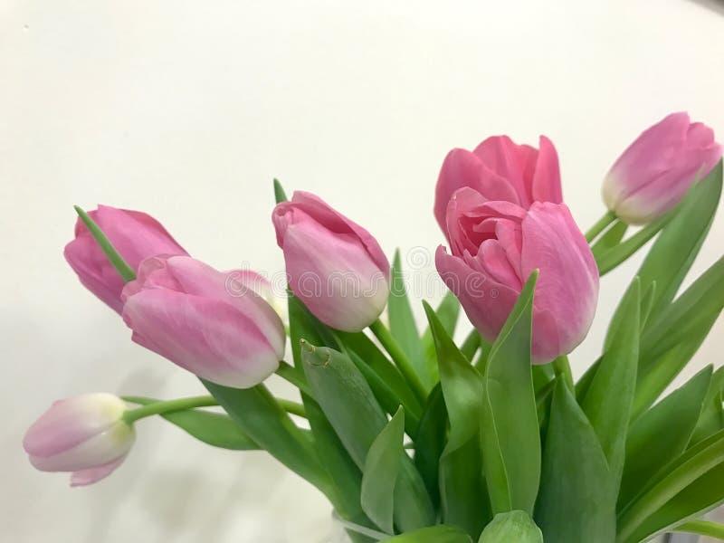 Rosa Tulpen an Valentinsgruß ` s Tag für Ihr geliebtes lizenzfreies stockfoto