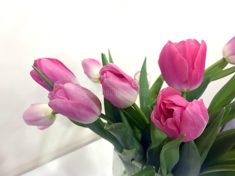 Rosa Tulpen an Valentinsgruß ` s Tag für Ihr geliebtes lizenzfreie stockbilder