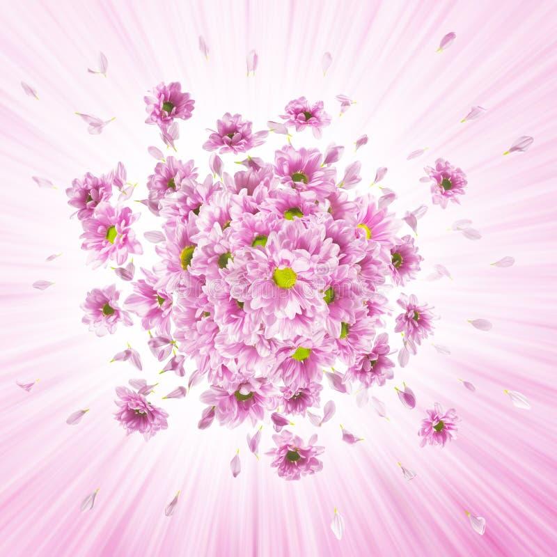 Rosa tusenskönaexplosion arkivfoton