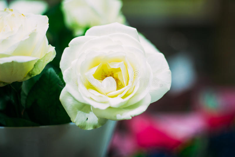 Rosa in un bello mazzo fotografia stock libera da diritti