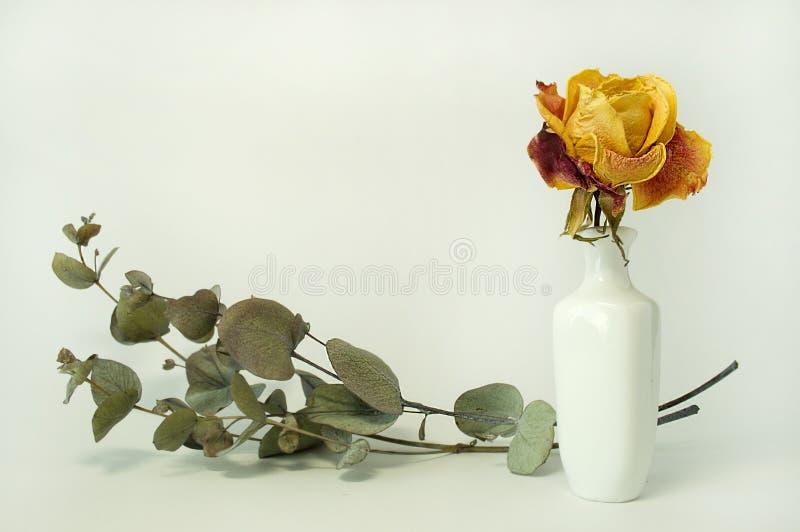 Rosa in un vaso fotografia stock