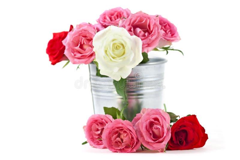 Rosa in una benna dello stagno immagine stock
