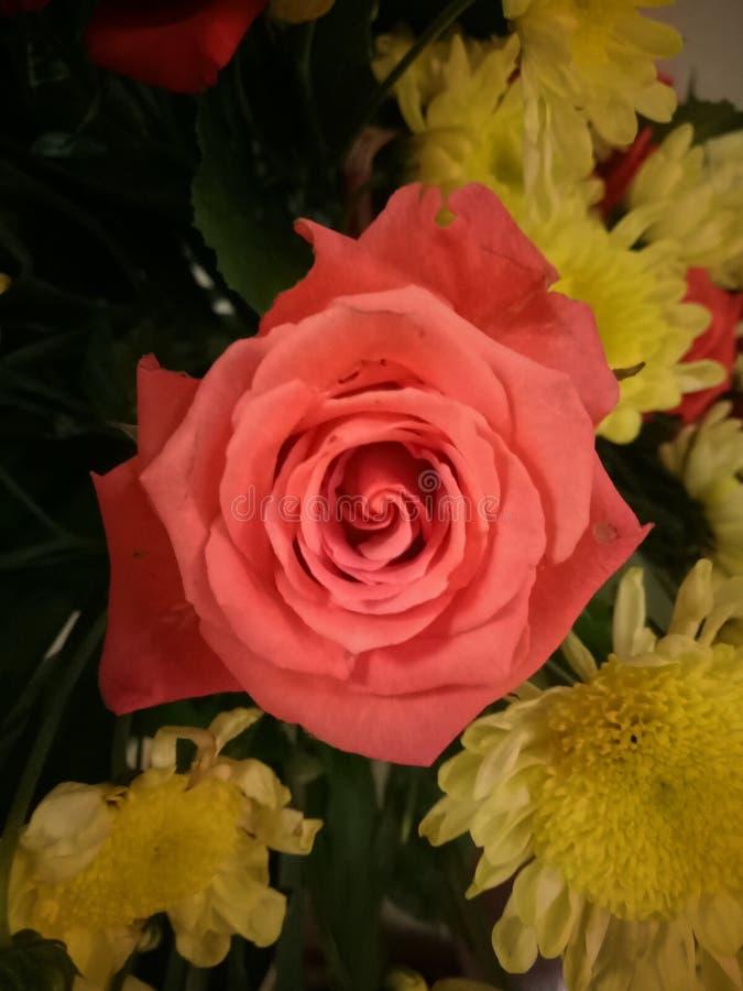 Rosa in una disposizione dei fiori immagini stock libere da diritti