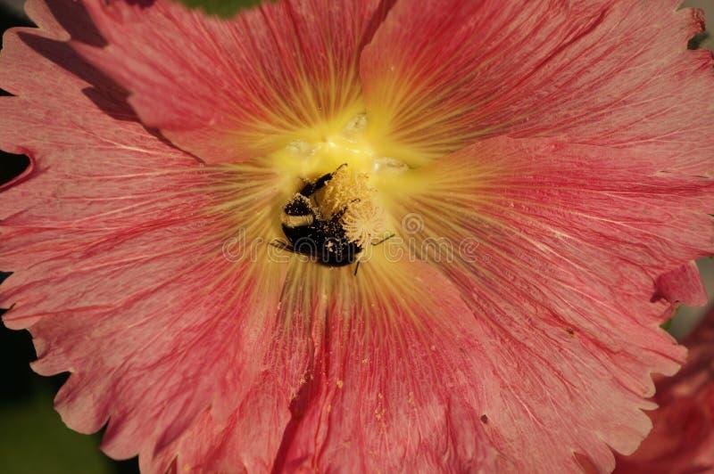 Rosa und gelbe Blumen lizenzfreies stockfoto
