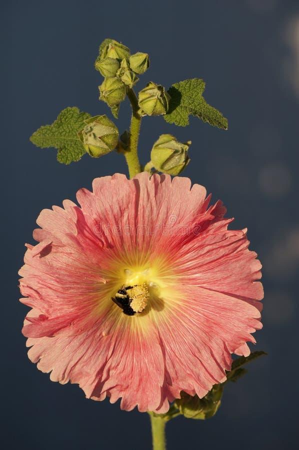 Rosa und gelbe Blumen lizenzfreies stockbild