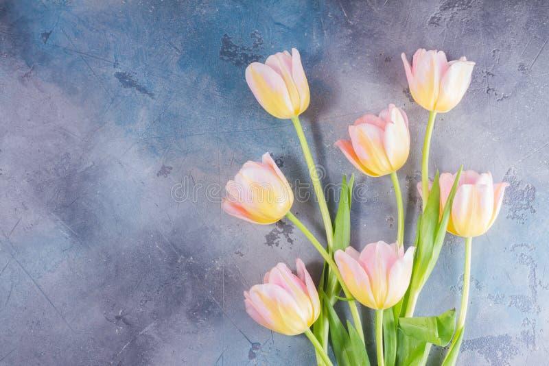 Rosa und gelbe Tulpen lizenzfreie stockfotografie