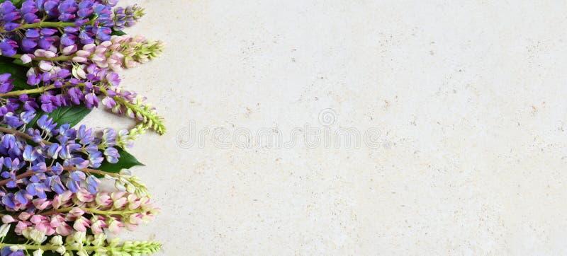 Rosa und purpurrote lupine Blumen auf Marmorhintergrund Geburtstag, Muttertag, Valentinstag, am 8. März, Hochzeitskarte oder invi stockfotos