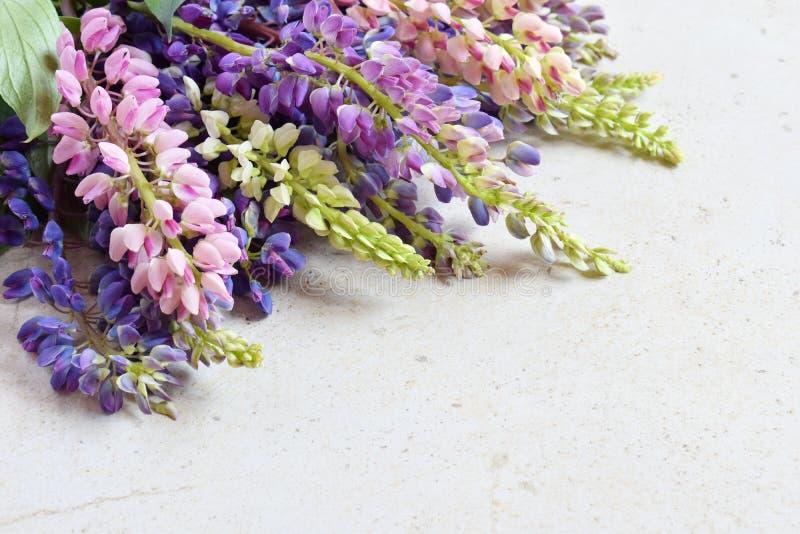 Rosa und purpurrote lupine Blumen auf Marmorhintergrund Geburtstag, Muttertag, Valentinstag, am 8. M?rz, Hochzeitskarte oder invi stockbild