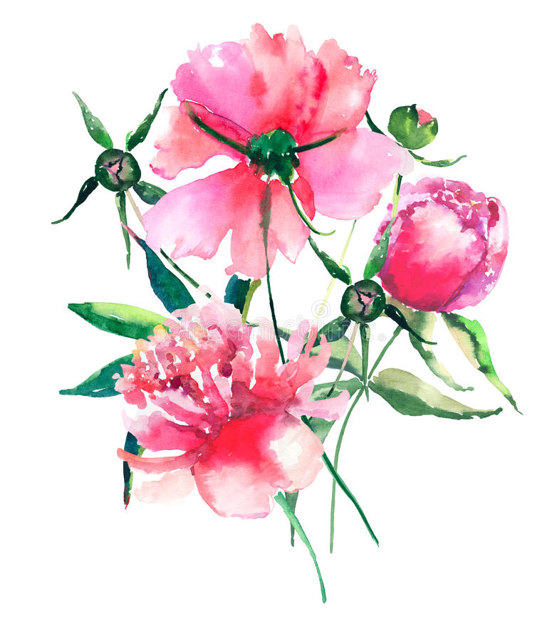 Rosa und rote Pfingstrosen des schönen empfindlichen zarten netten eleganten reizenden bunten Frühlingsmit blumensommers mit grün lizenzfreie abbildung