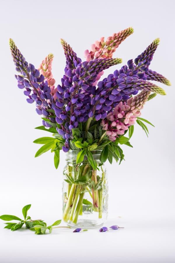 Rosa und violette Lupinen im Glasvase auf weißem Hintergrund stockbilder