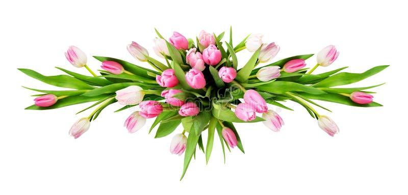 Rosa und weiße Tulpe blüht horizontale Anordnung lizenzfreie stockfotos