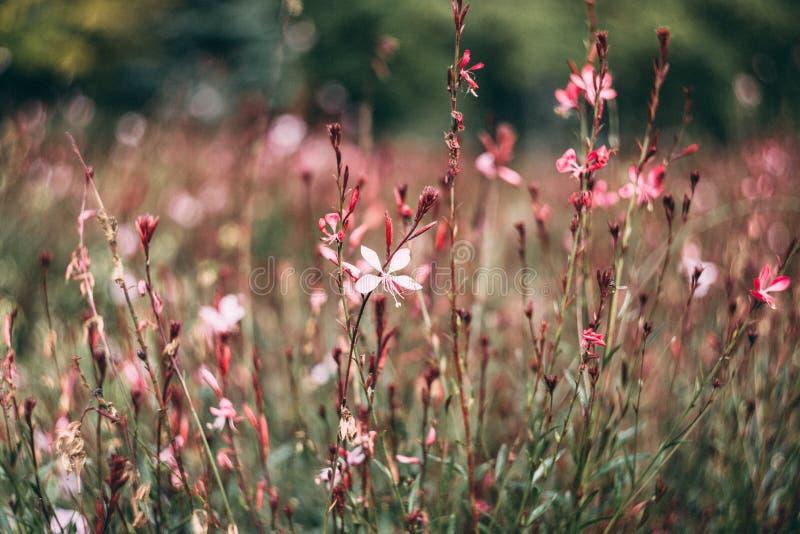 Rosa-und weißepetaled Blume in der Nahaufnahme-Fotografie tagsüber stockfotografie