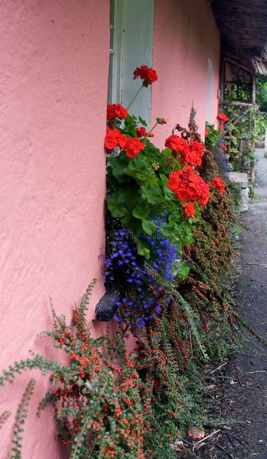 Rosa vägg med färgrik windowbox arkivfoton