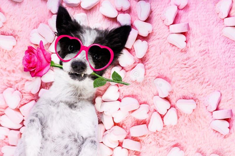 Rosa valentin för hundförälskelse royaltyfri bild