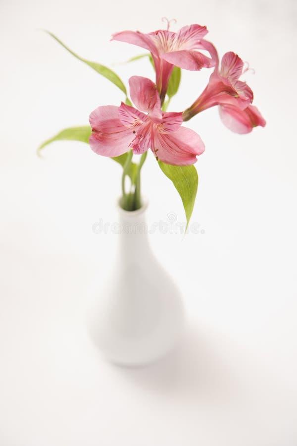 rosa vase för blommor royaltyfri fotografi