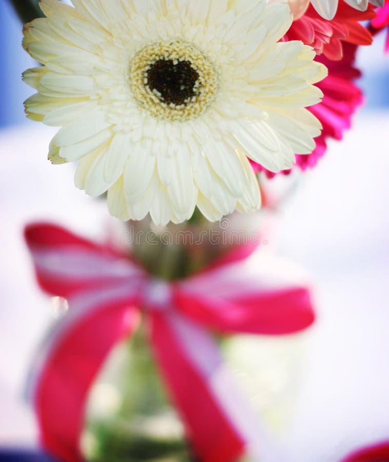 rosa vasewhite för blommor royaltyfri foto
