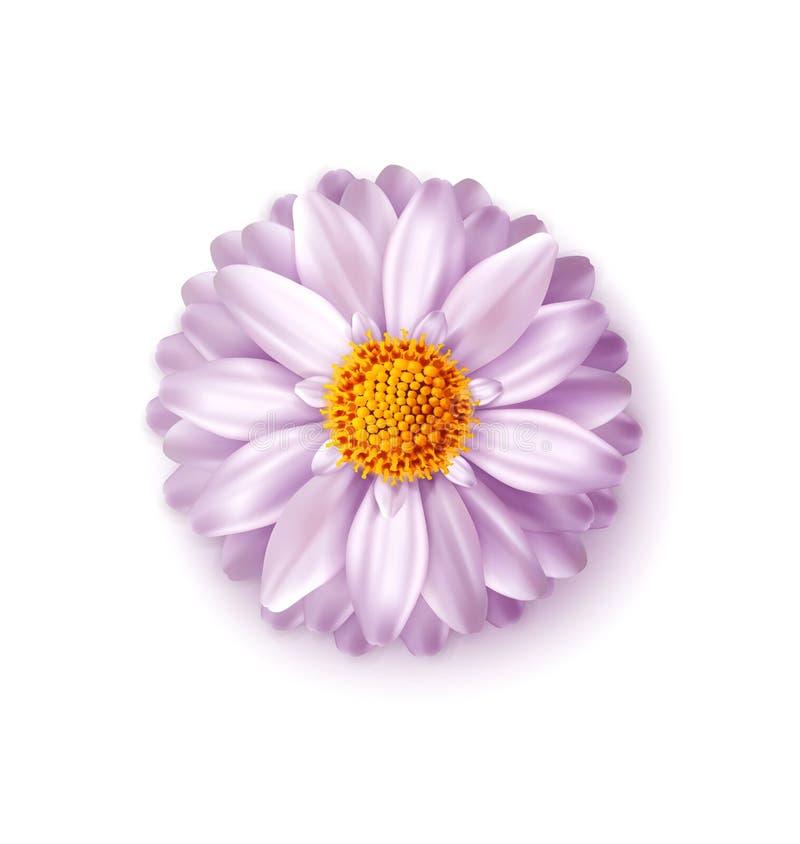 Rosa Vektorblume lokalisiert auf weißem Hintergrund Element für ein f stock abbildung
