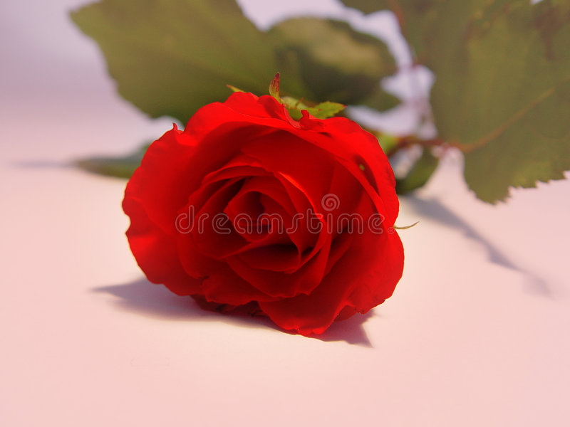 Download Rosa vermelha imagem de stock. Imagem de amar, romântico - 62637