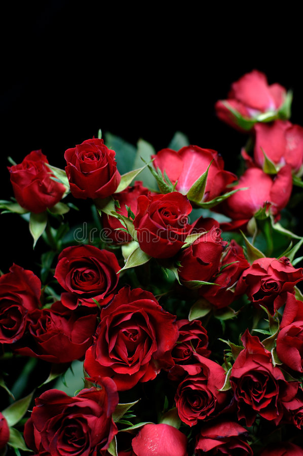 Rosa vermelha Boquet foto de stock