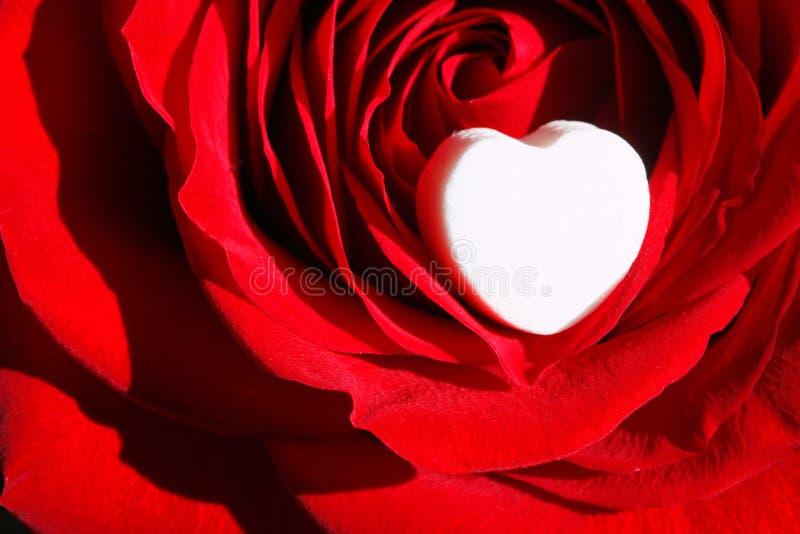 Rose With White Heart Vermelha ~ Ascendente Próximo Do Macro Fotografia De Stock
