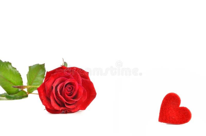 Rosa vermelha e coração imagens de stock royalty free