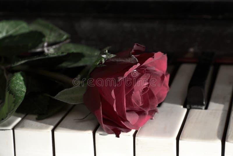 Rosa vermelha e o piano imagens de stock royalty free