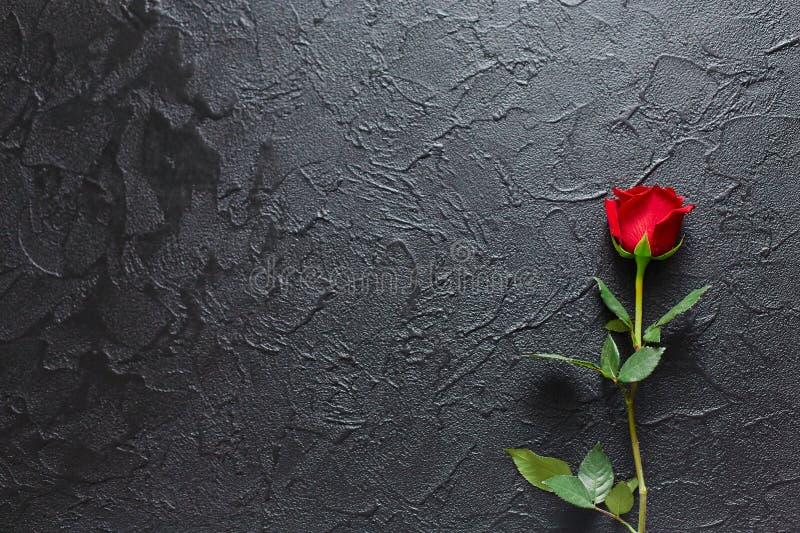 Rosa vermelha em um fundo preto, pedra Um cartão dos pêsames Espaço vazio para emocional, citações ou provérbios A vista da parte fotografia de stock