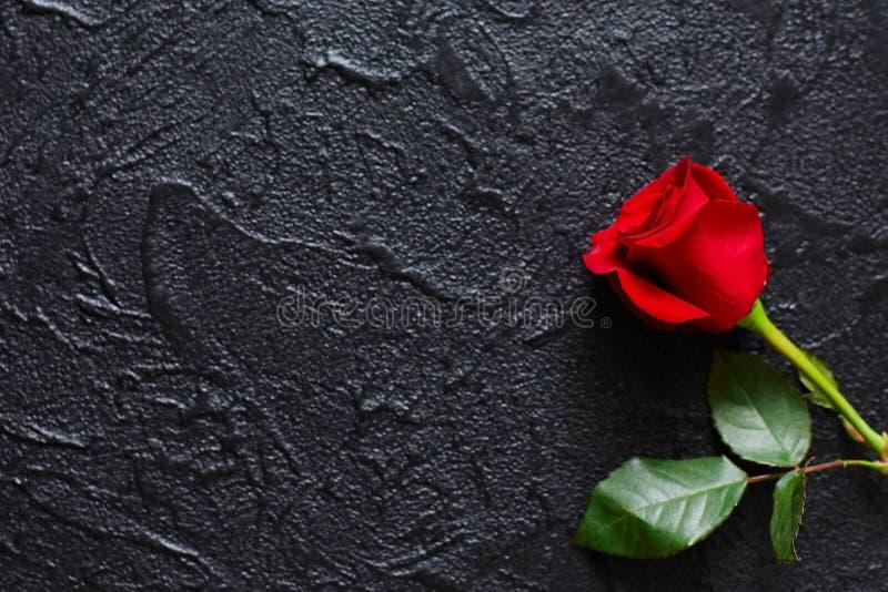 Rosa vermelha em um fundo preto, pedra Um cartão dos pêsames Espaço vazio para emocional, citações ou provérbios A vista da parte fotografia de stock royalty free