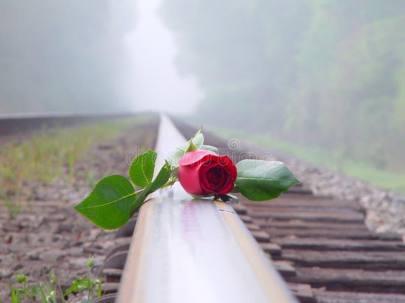 Rosa vermelha na estrada de ferro fotos de stock