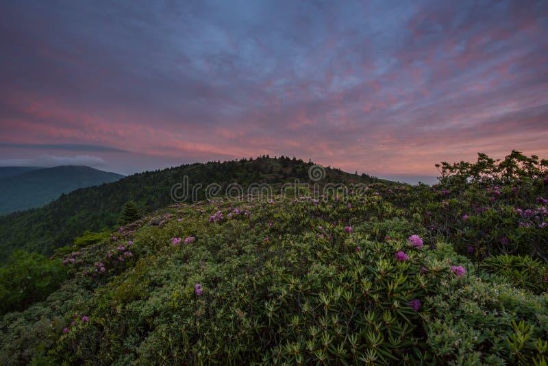 Rosa Wolken über Rhododendron-Blüte stockbilder