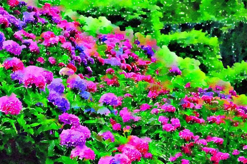 Rosa y hortensias púrpuras en el jardín del verano El diseñar de la acuarela fotografía de archivo libre de regalías