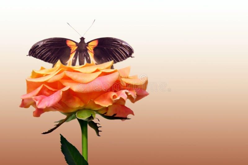 Rosa y mariposa del rojo fotografía de archivo libre de regalías